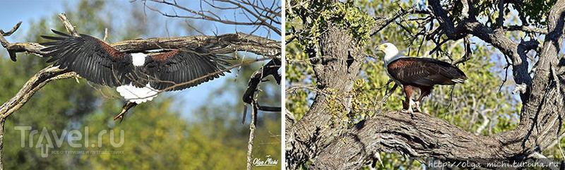 Наедине с речным монстром / Ботсвана