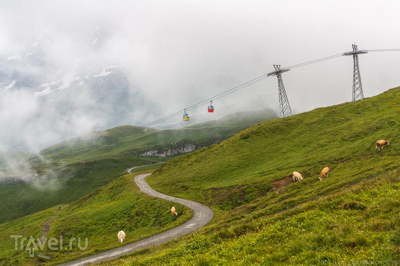 В гостях у Людоеда / Фото из Швейцарии