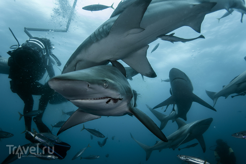 ЮАР. Проблемы при съемке акул / ЮАР