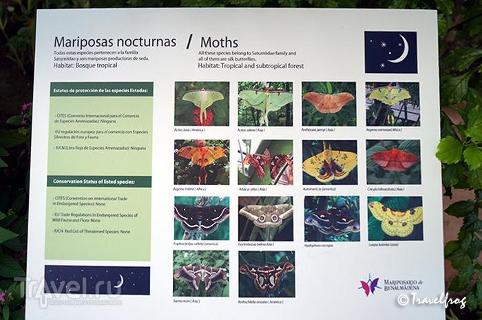 Парк бабочек в Бенальмадене (Коста-дель-Соль, Испания) / Фото из Испании