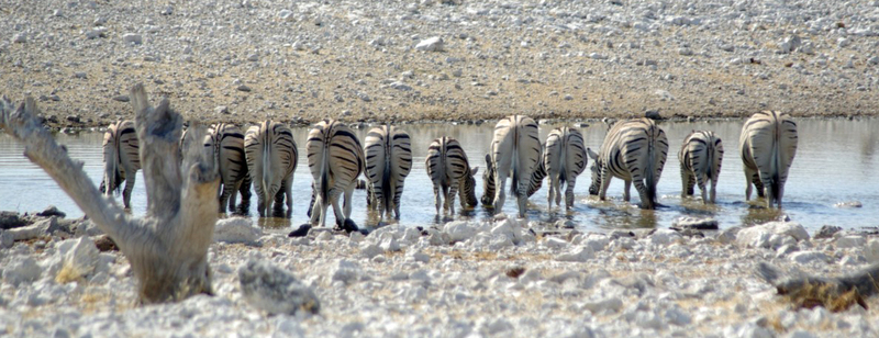 Африка. Наш взгляд. Воспоминания в фотографиях / Намибия