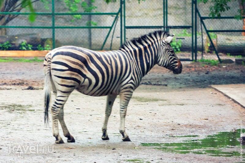 Зоопарк в Лодзи / Польша