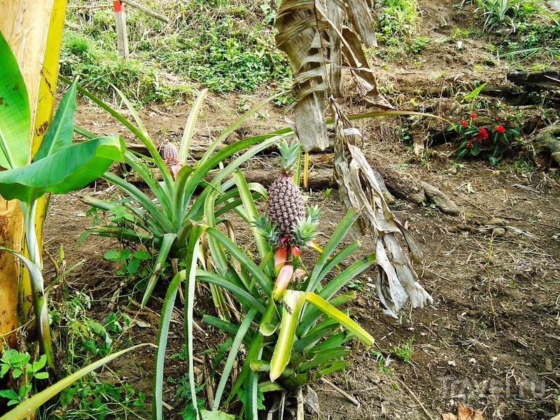 Добро пожаловать в джунгли! / Перу