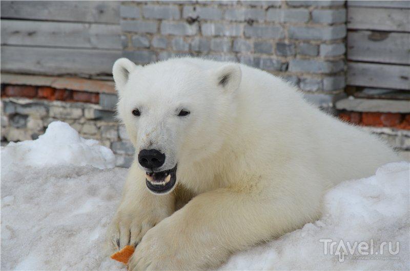 Северные острова - царство белых медведей. Рассказы летчика / Россия