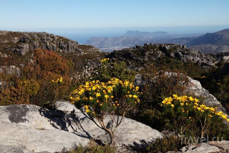 Весна в Кейптауне / ЮАР
