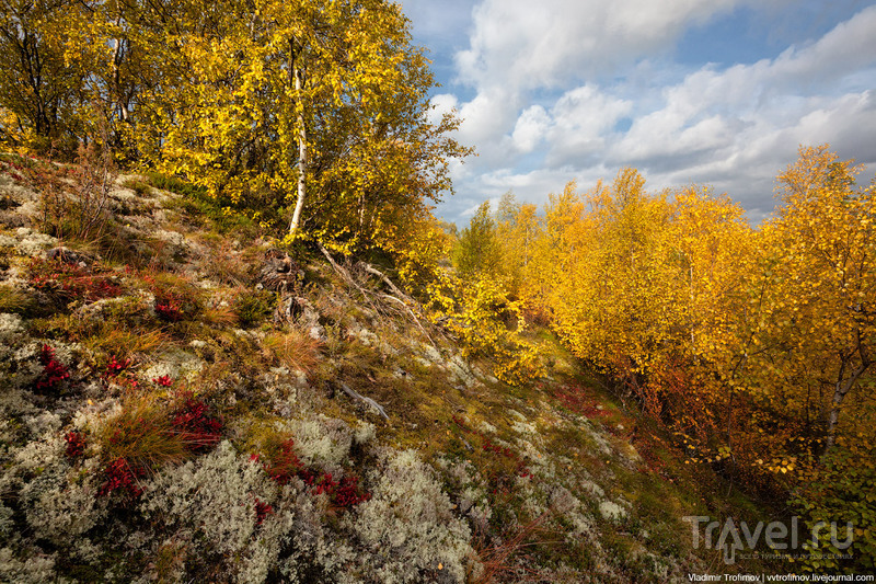 Тундра глазами северного оленя / Россия