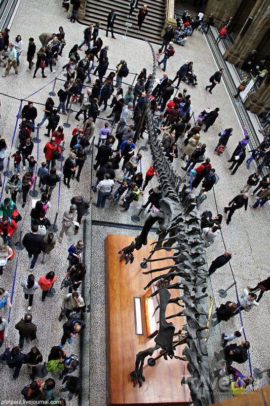 Лондонский Музей Естествознания / Великобритания