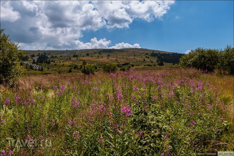 Болгария. Горный массив Витоша / Фото из Болгарии