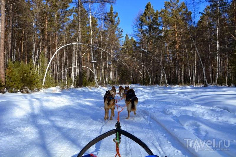 Зимний Байкал и покатушки на собаках / Фото из России