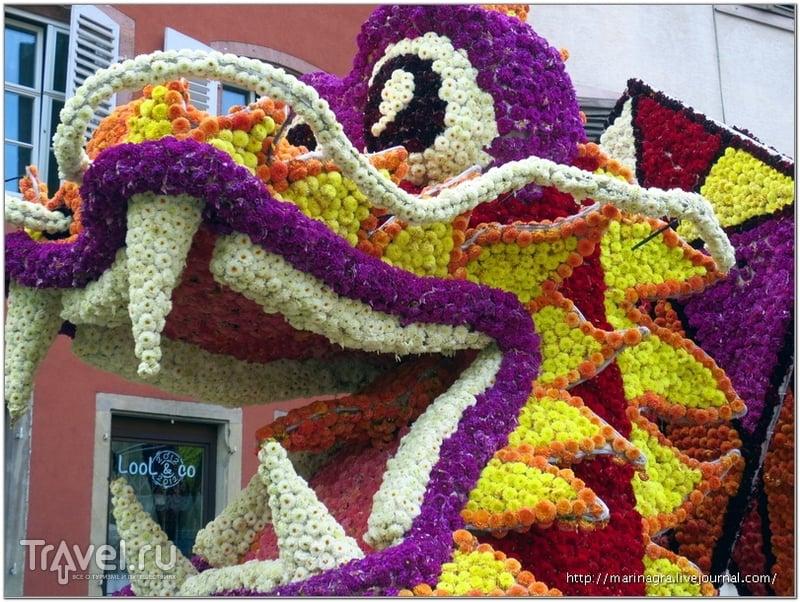 Цветочный парад в Селесте: полмиллиона георгинов / Фото из Франции