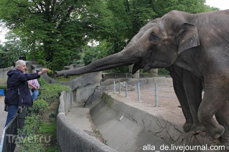Парк с животными Hagenbeck / Германия