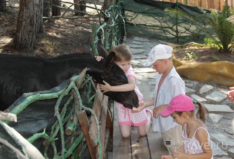 "В контактном зоопарке парка ""Олимп"""