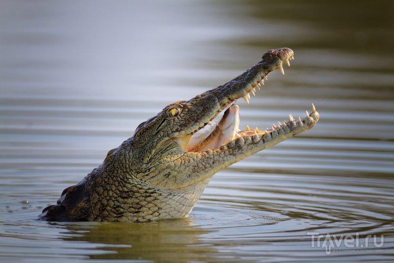 В террариуме-зоопапке Адлера можно увидеть настоящего нильского крокодила
