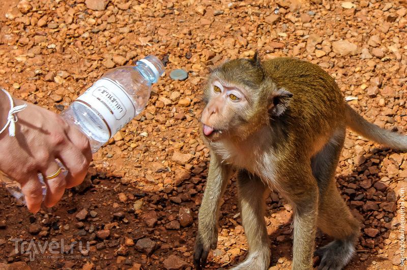 Пост, в котором много-много диких обезьян... / Таиланд