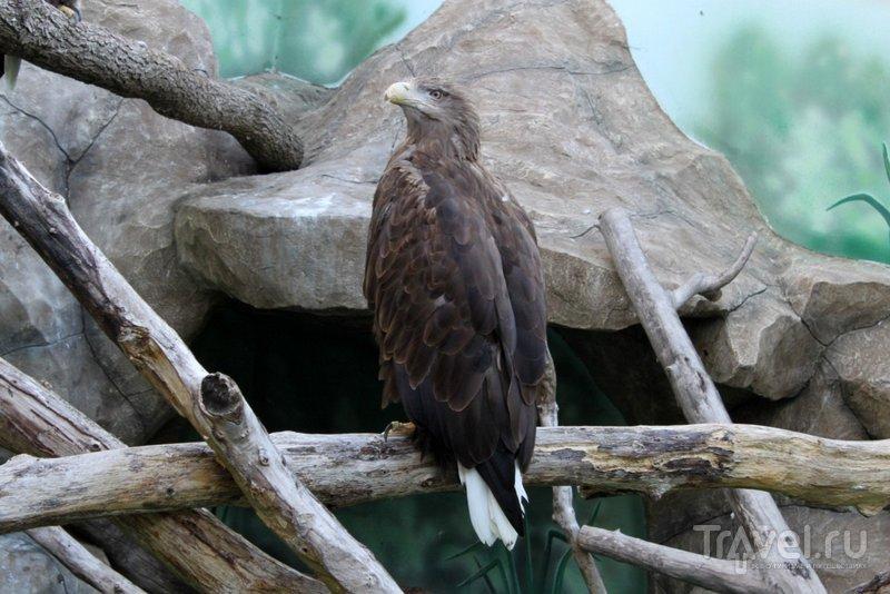 """В """"Балу"""" можно увидеть хищных птиц"""
