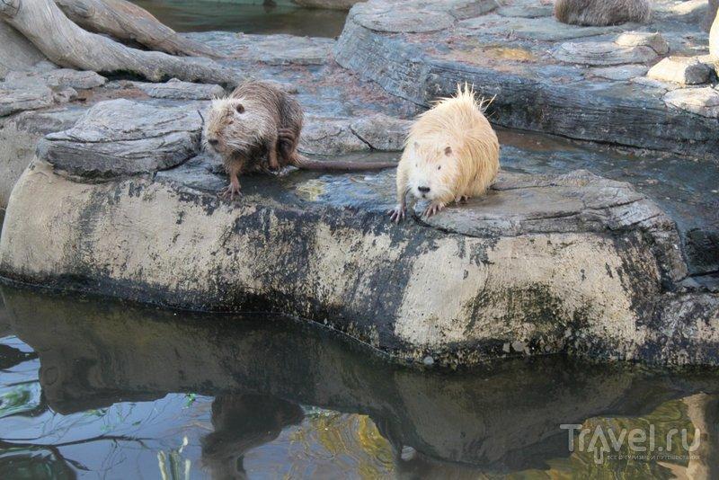 Симпатяги-нутрии из зоопарка Анапы