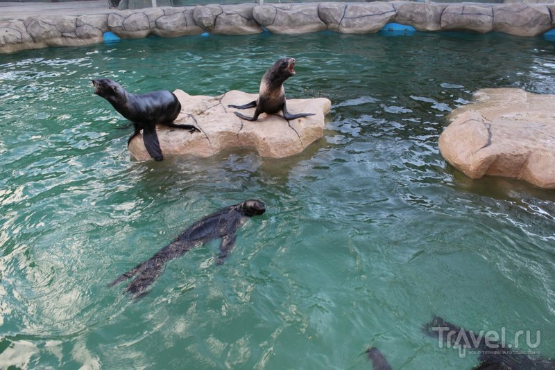 """Балу"" - самый большой зоопарк Анапы"