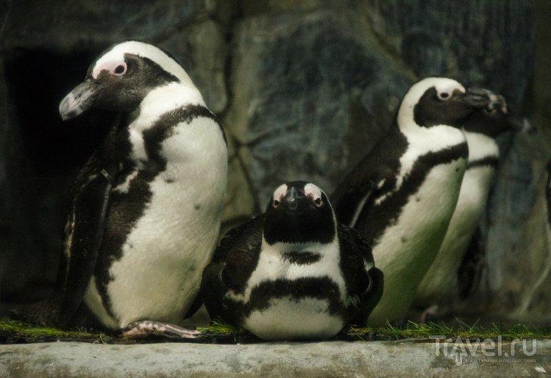 """Пингвины почти как из мультика """"Мадагаскар"""""""