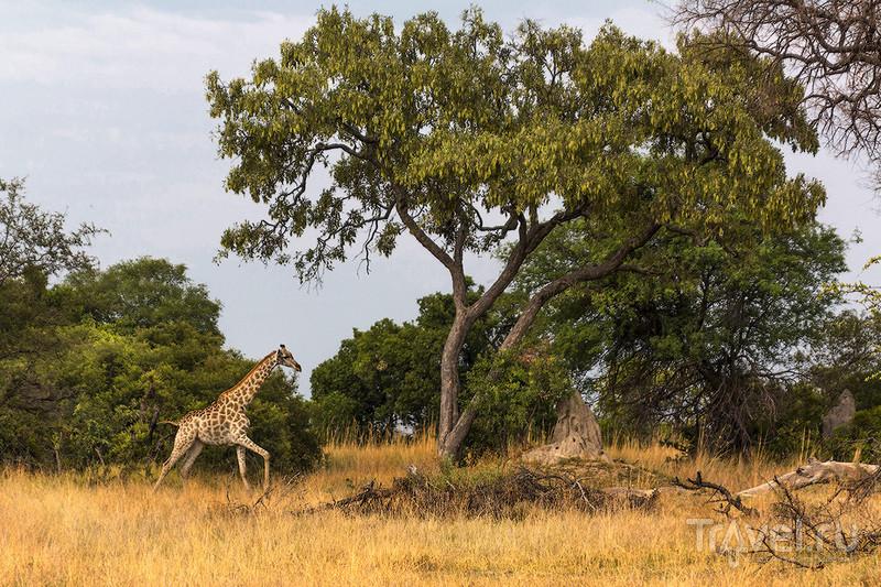 Ботсвана. Дельта Окаванго. Остров Шинде / Фото из Ботсваны