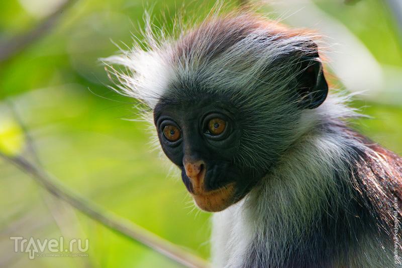 Большое Африканское Приключение / Фото из Танзании
