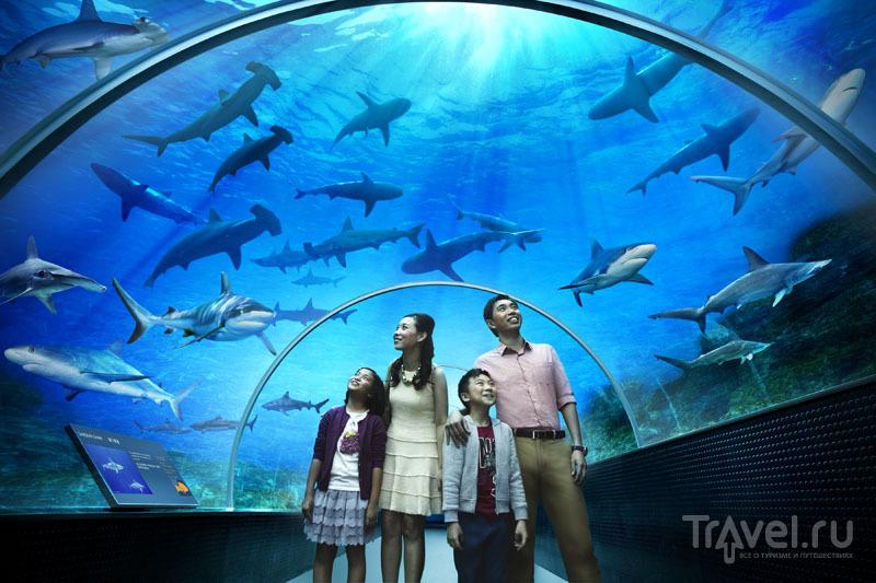Океанариум Marine Life Park