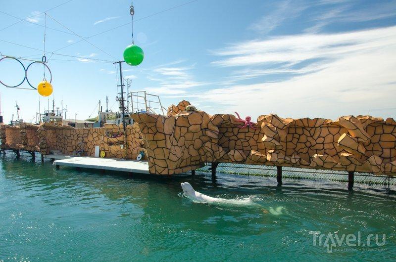 В Утришском дельфинарии