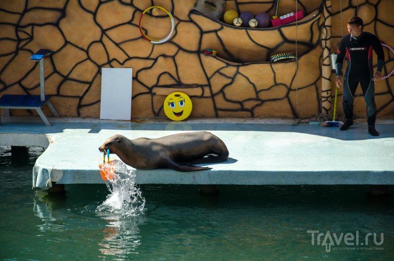 Морские львы также умны как дельфины, но подход в обучении - совершенно разный