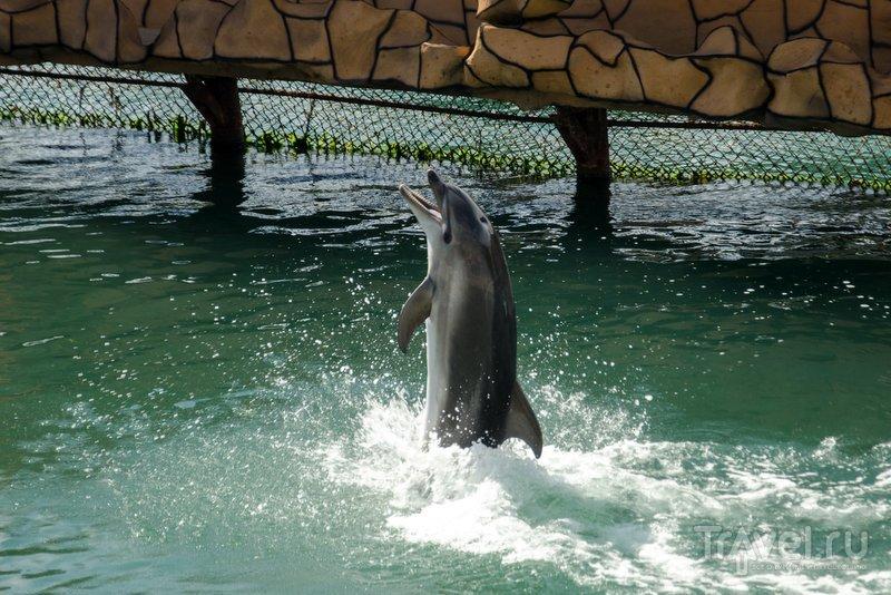 Танцующий дельфин