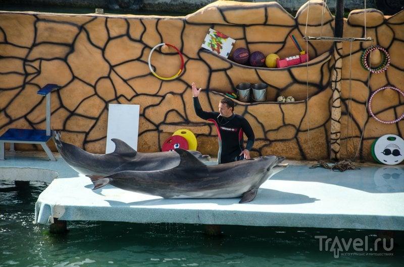 У одной из дельфиньих пар год назад родился малыш