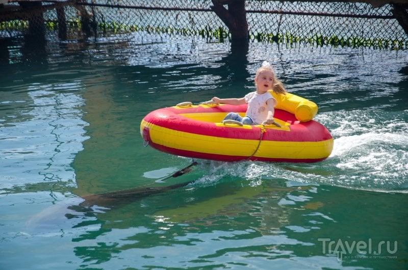 Дополнительная услуга для детей - катание на надувной лодке, которую везет дельфин