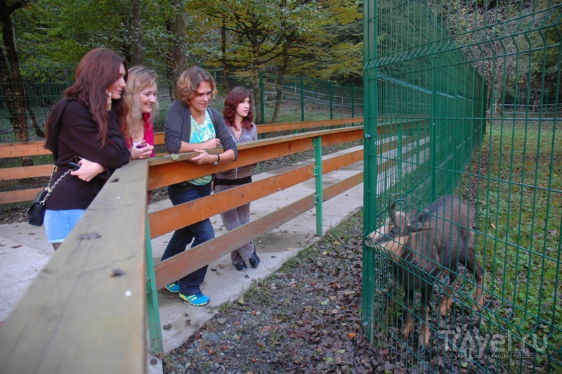 В вольерах живут представители кавказской фауны