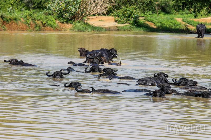 Удавалаве: дом слонов и павлинов / Шри-Ланка