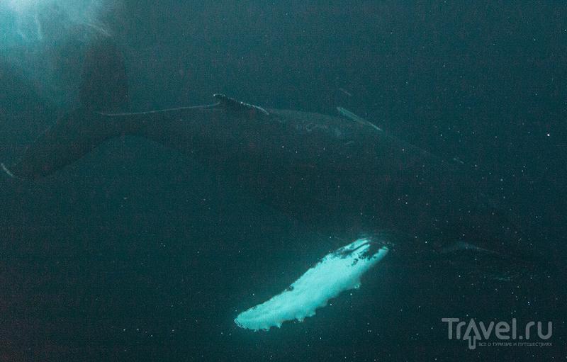Норвегия. Под водой и на суше / Фото из Норвегии