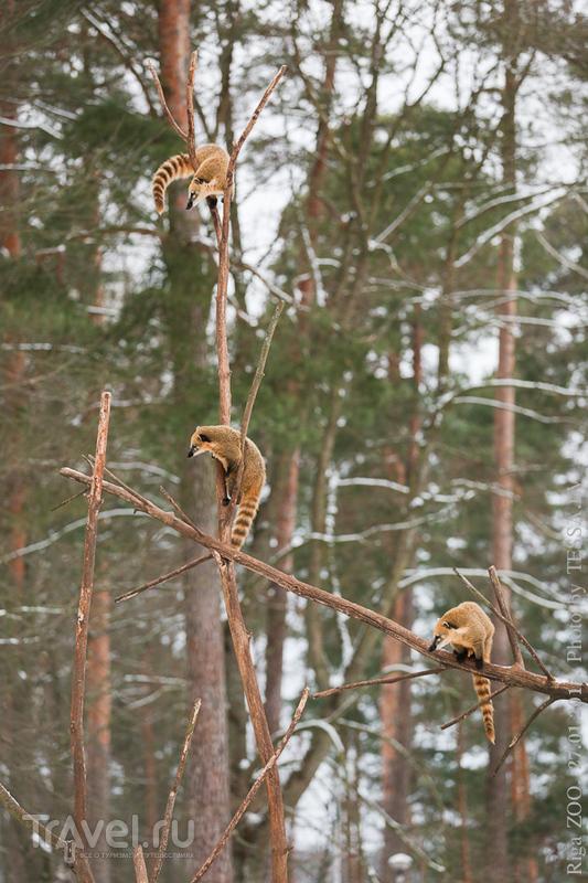 Что делать зимой в Риге? / Латвия