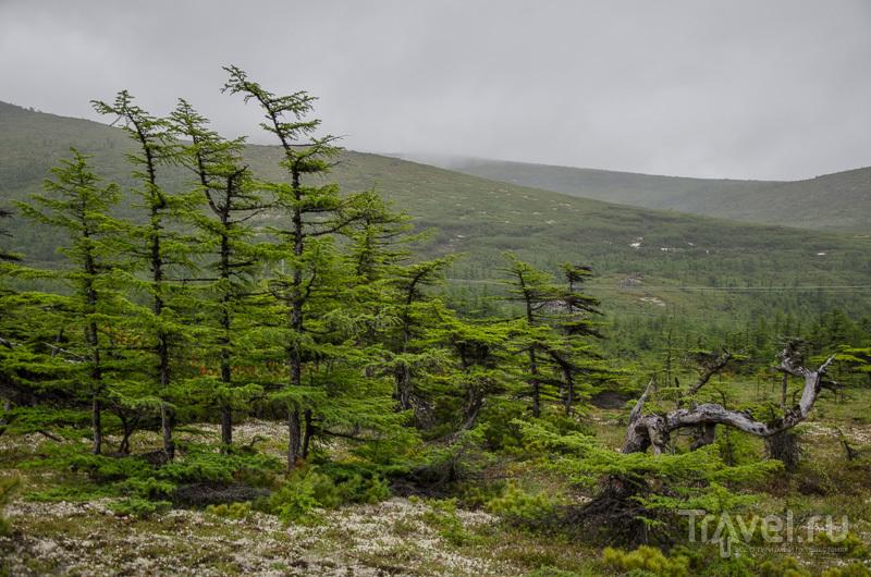 Почти что лес / Фото из России