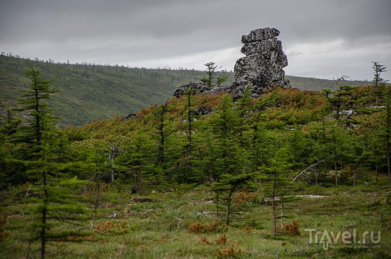 Деревья и камни / Фото из России