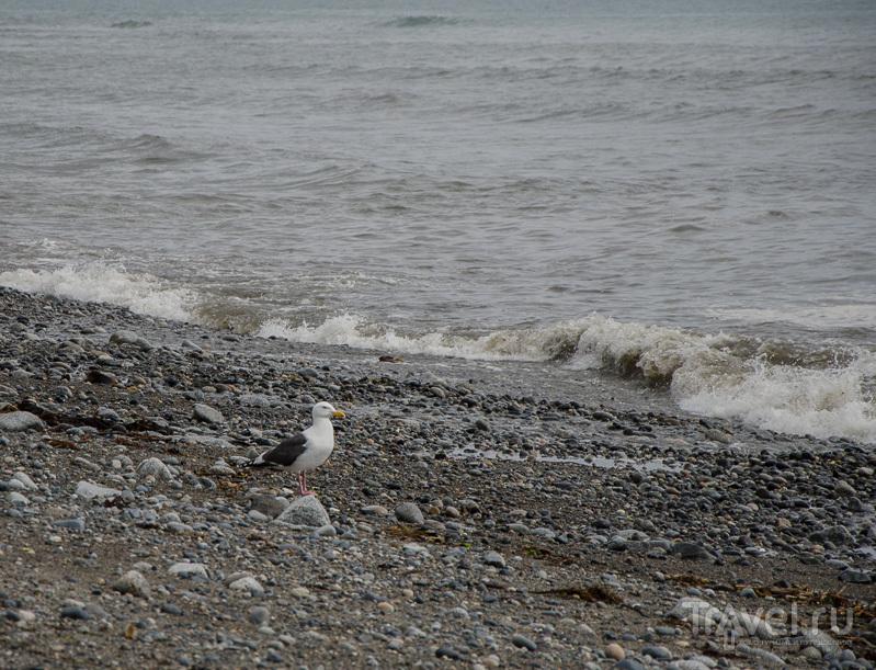 Чайка, волны, галька / Фото из России