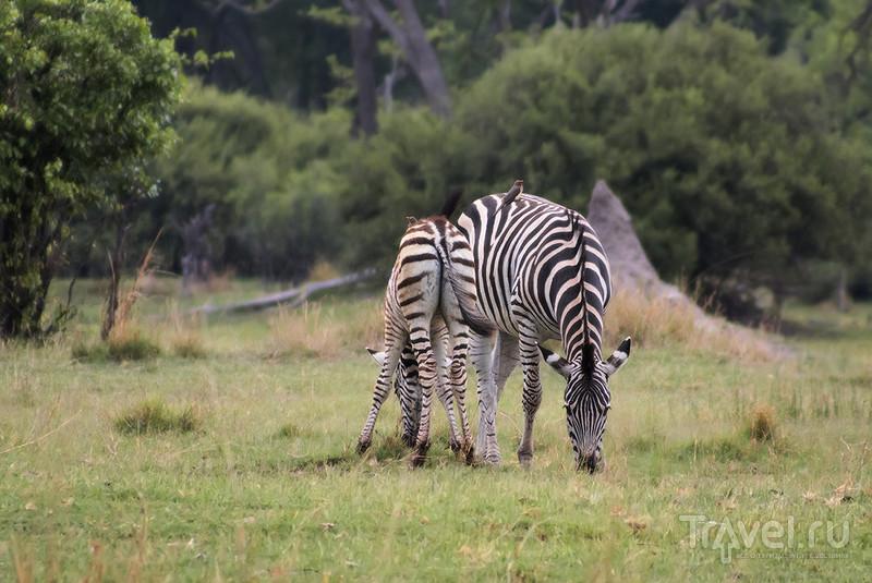 Ботсвана. Дельта Окаванго. Заповедник Мореми / Фото из Ботсваны