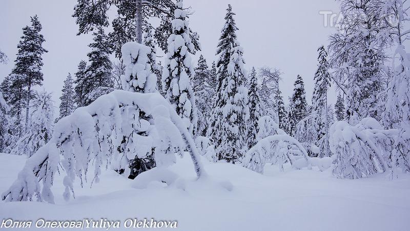 В гостях у Санта Клауса - катание в оленьих упряжках по сказочному лесу / Фото из Финляндии