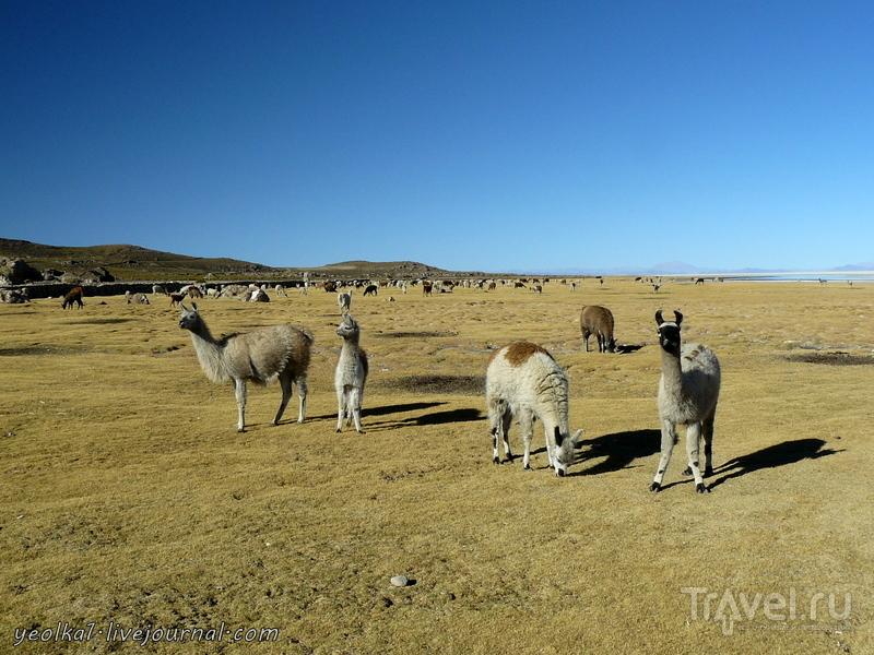 "Un gran viaje a America del Sur. Боливия. Выход в космос. Салар де Уюни - ""планета Европа""... / Фото из Боливии"