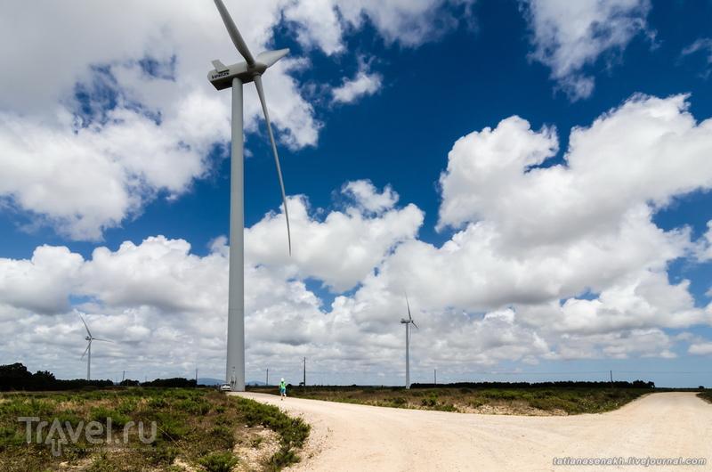 Португалия, июнь 2014. Сосны, ветер, лето и ... адреналин! / Португалия