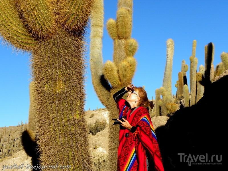 Un gran viaje a America del Sur. Боливия. Выход в космос. Остров Инкауаси - кактусы на коралловом рифе / Фото из Боливии