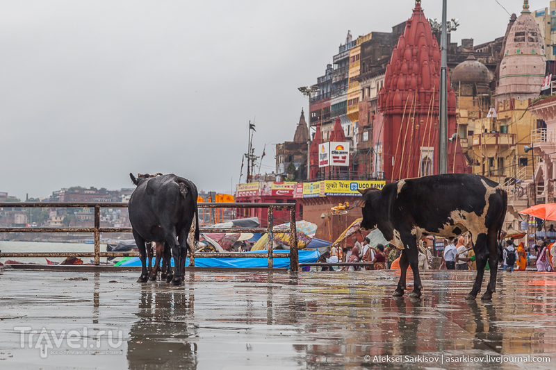 Индия. Варанаси / Индия
