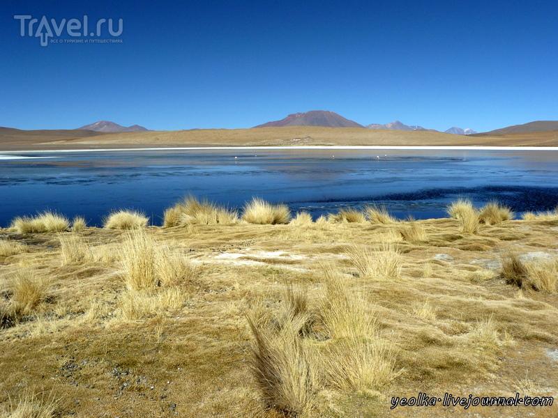 Un gran viaje a America del Sur. Боливия. Выход в космос. Обитатели Альтплано / Фото из Боливии