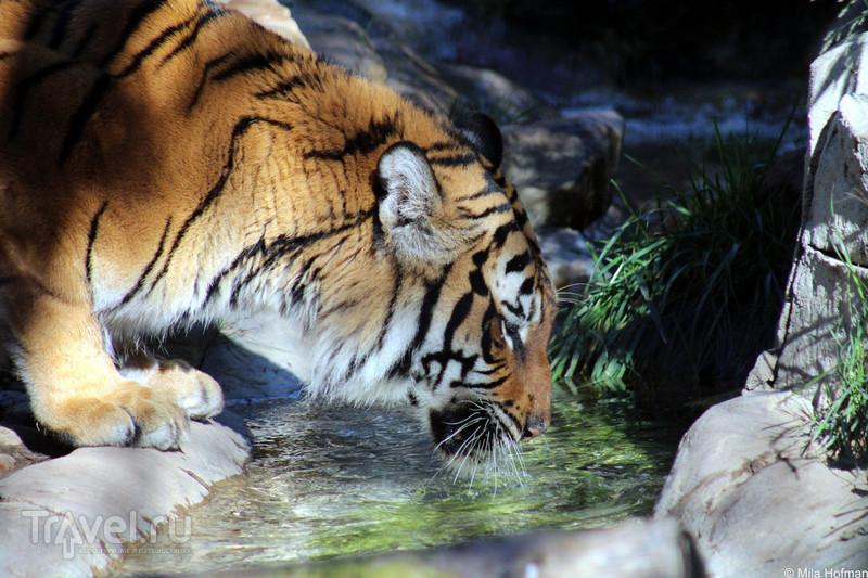 Зоопарк в Atascadero / США