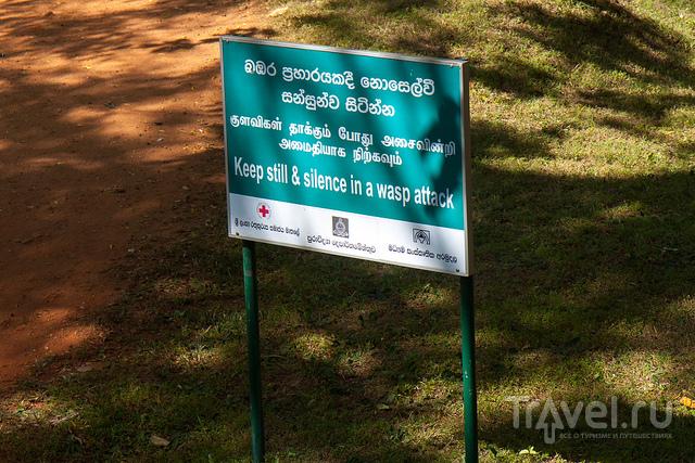 Шри-Ланка / Шри-Ланка