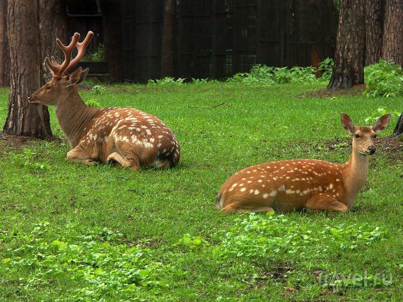 Животным в Новосибирском зоопарке живется вольготно