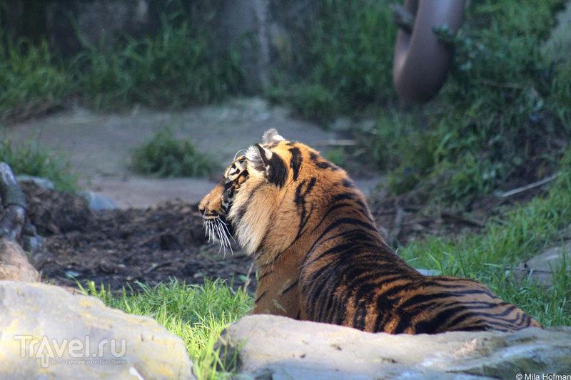 Зоопарк San Francisco / Фото из США