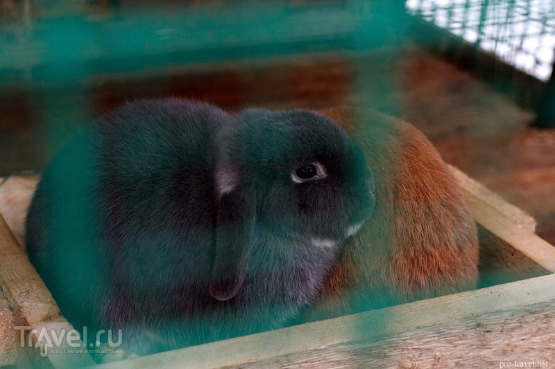Великоустюгский зоопарк (Зоосад Деда Мороза) / Россия