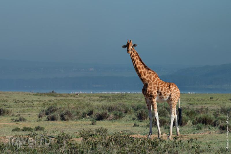 Романтизм и носороги / Кения
